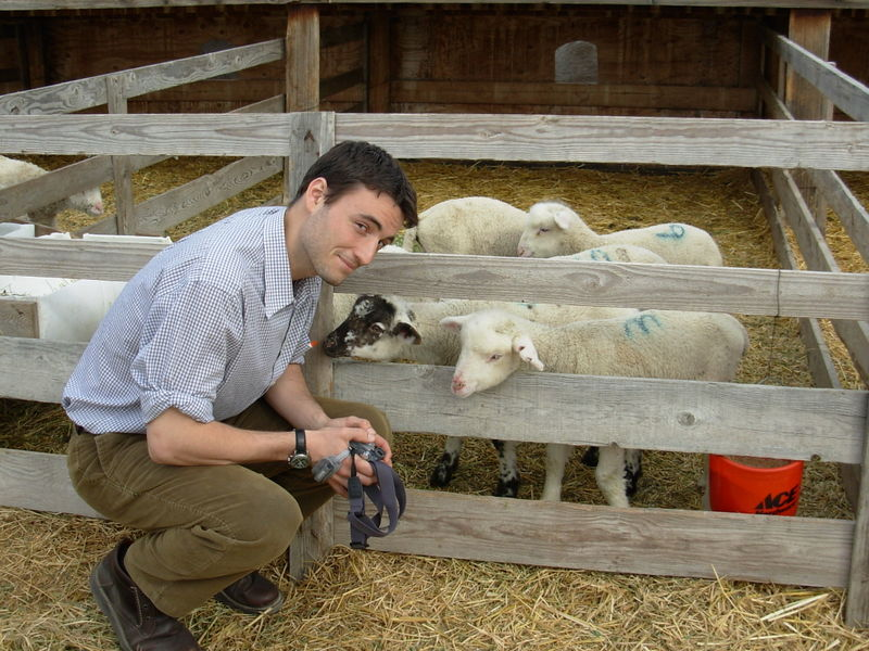 Jesse with sheep